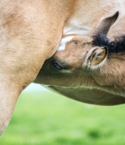 Kentucky Performance Products: Nutritional Demands of Lactation