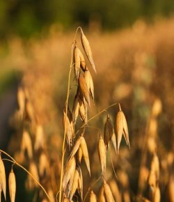 Kentucky Performance Products : Nutritional Mythbusting — Plain Organic Grains