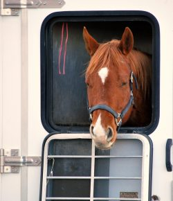 Weekend Wellness: Keeping Horses Healthy During Transport