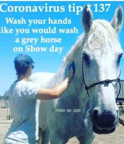 The Best Horse Related COVID-19 Memes on the Internet