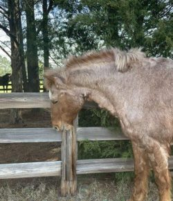 Cribbing: A New Take, Brought to You by Banixx Horse Care