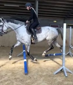 Ecovet Presents Mind Your Melon: Fancy Foot Work