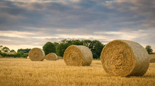 Kentucky Performance Products: How to Test Your Hay