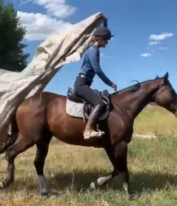 Ecovet Presents Mind Your Melon: Bridleless Obstacles