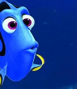 A Fish Called Dory: A Concussion Story