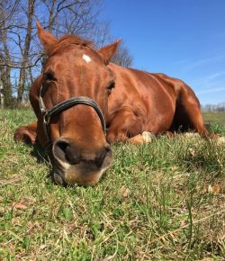 Photo Challenge: 15 Horses Laying Low