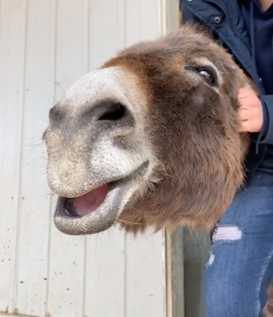 Friday Feels, by Flexible Fit Equestrian: One Content Donkey
