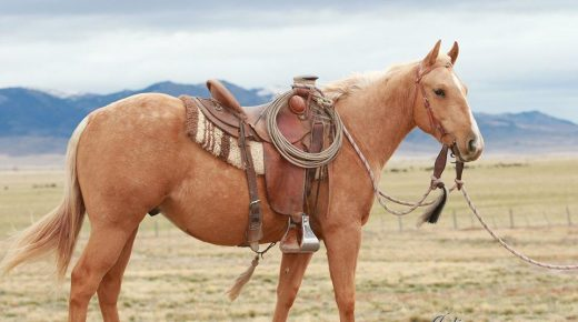 National Annual Colt Sale of MCH and UMW Still a Success After Moving to Internet Auction