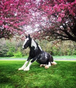 Photo Challenge: 16 Spring Snapshots