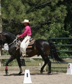 Cowboy Dressage Competitions Continue During Pandemic