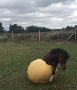 #TGIF, by Flexible Fit Equestrian, USA: Weekend Entertainment