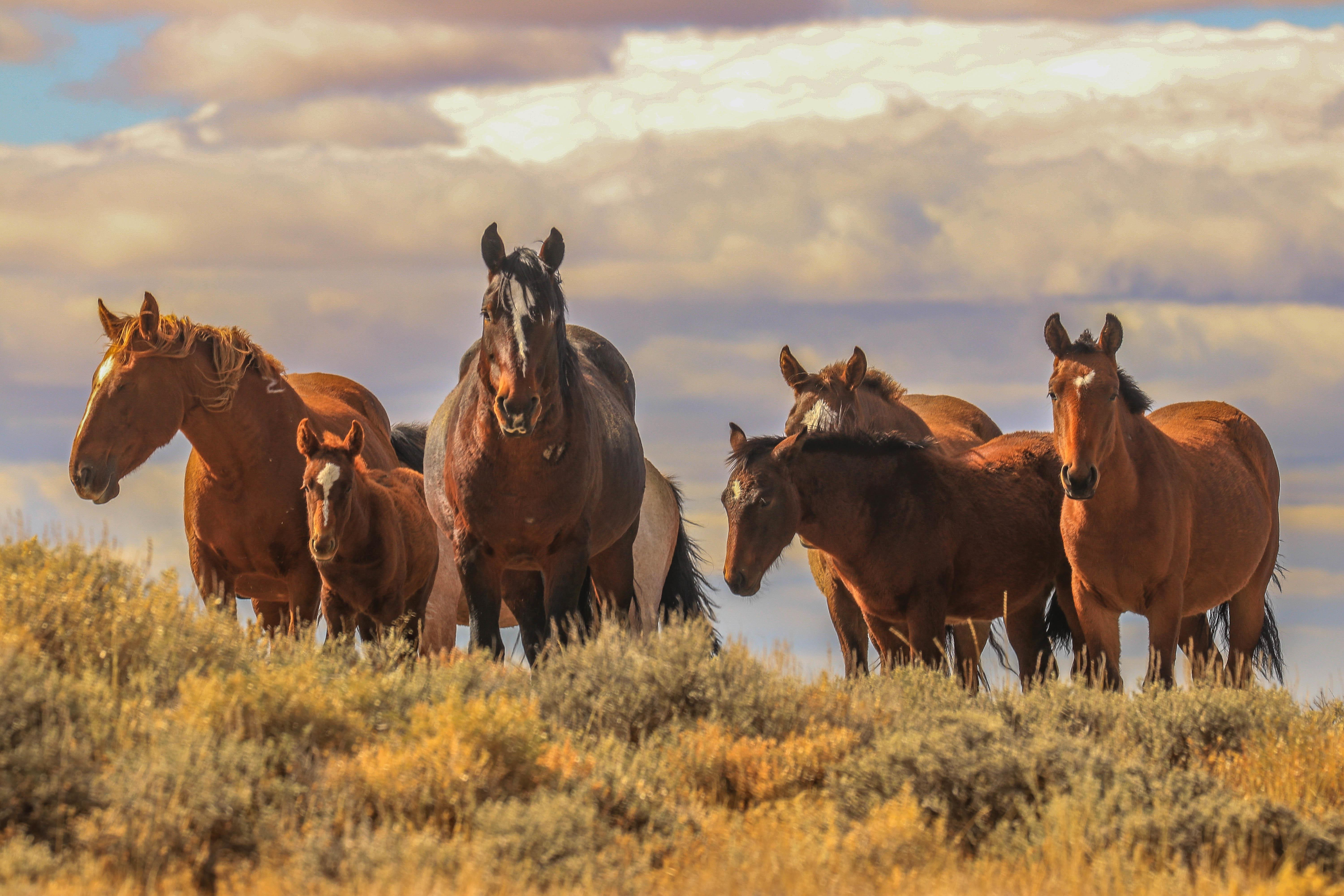 Feds Intent On Removing Wyoming S Wild Horses Horse Nation