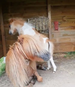 #TGIF, by Flexible Fit Equestrian: Expectation vs. Reality