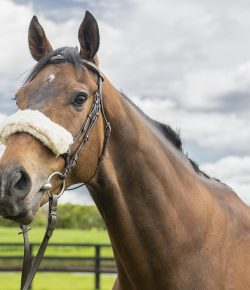 Ask Christine: FAQS About OTTBs