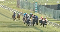 #TGIF, by Flexible Fit Equestrian: COVID-19 Race