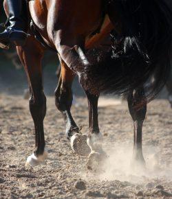 Weekend Wellness: 7 Tips on Equine Conditioning With Biomechanics