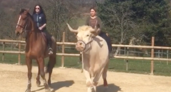 Thursday Video: What a Cow!