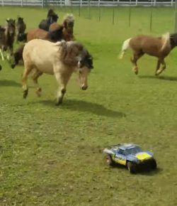 Kentucky Performance Products Tuesday Video: RC Cars and Minis