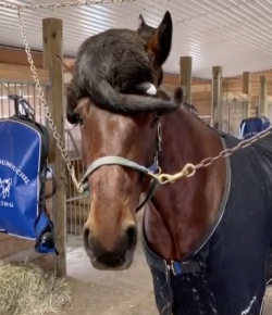 #TGIF, by Flexible Fit Equestrian: Hangin' With Friends