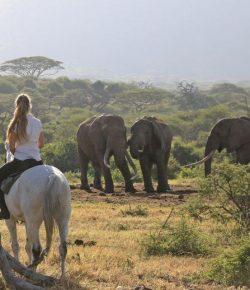 The Next Big Thing: Horse Safari