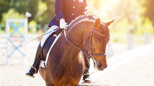 Best of JN: The Value of Stressage, I Mean Dressage