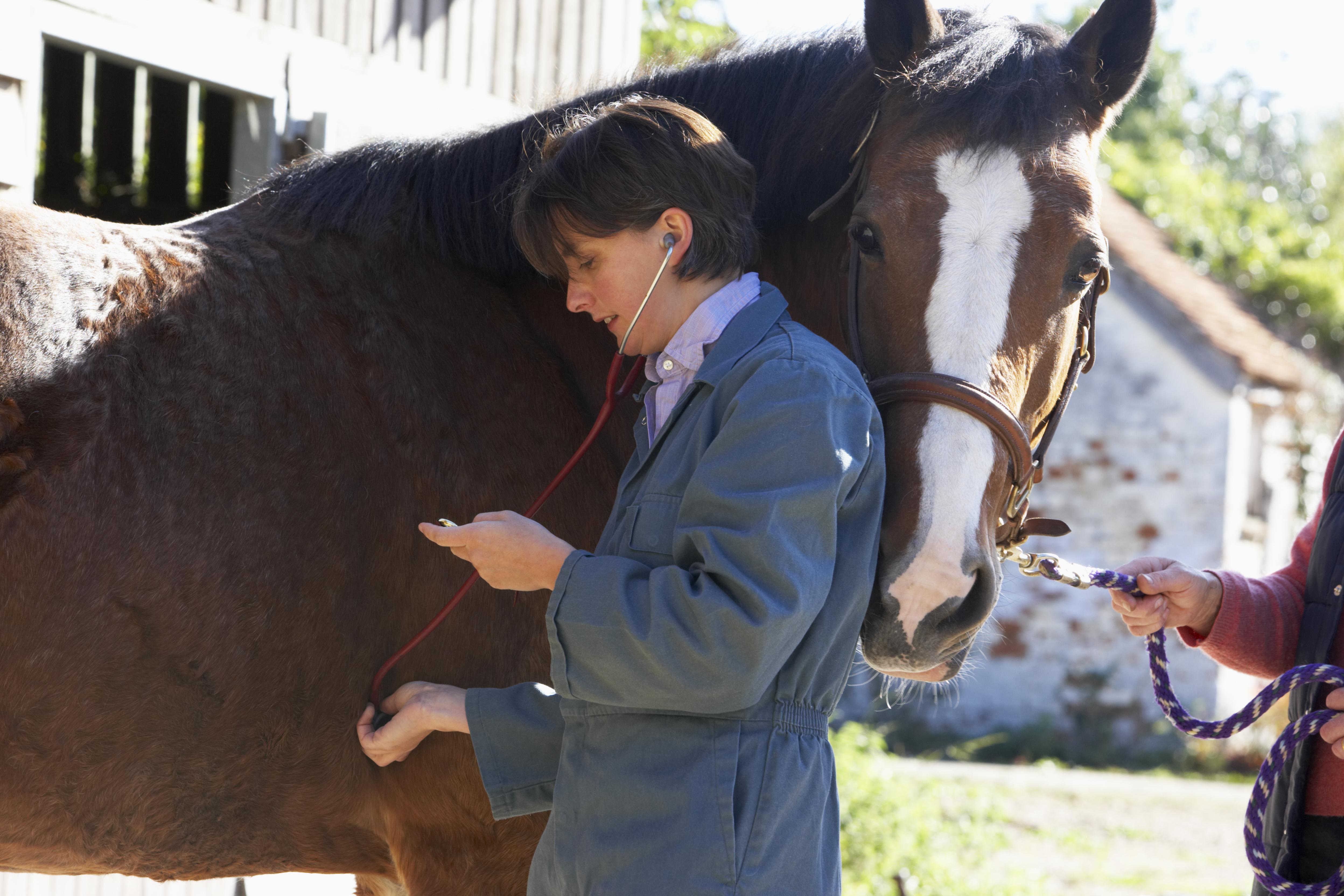 Produtos de desempenho do Kentucky: sinais vitais do seu cavalo 4