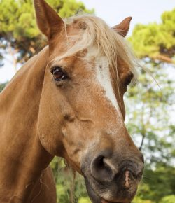 Horsemanship with Lindsey Partridge: Stuck in a Stressed State