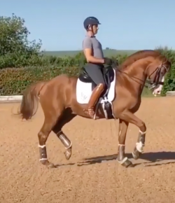 #TGIF by Flexible Fit Equestrian: Dancing Into the Weekend