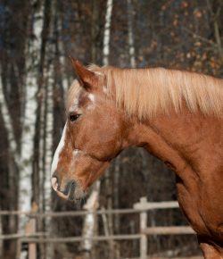 House Votes to Ban Unsafe Horse Transport in Federal Transportation Legislation