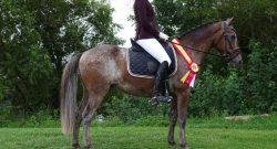Reader Photo Challenge: 10 Rescue Horses