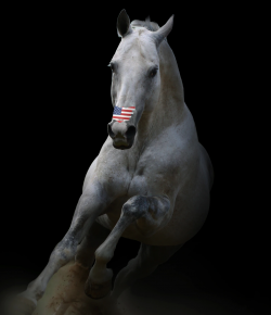 Show Us Your Patriotic Horse Pics to Win 2 Packs of USA Flag FLAIR Strips!