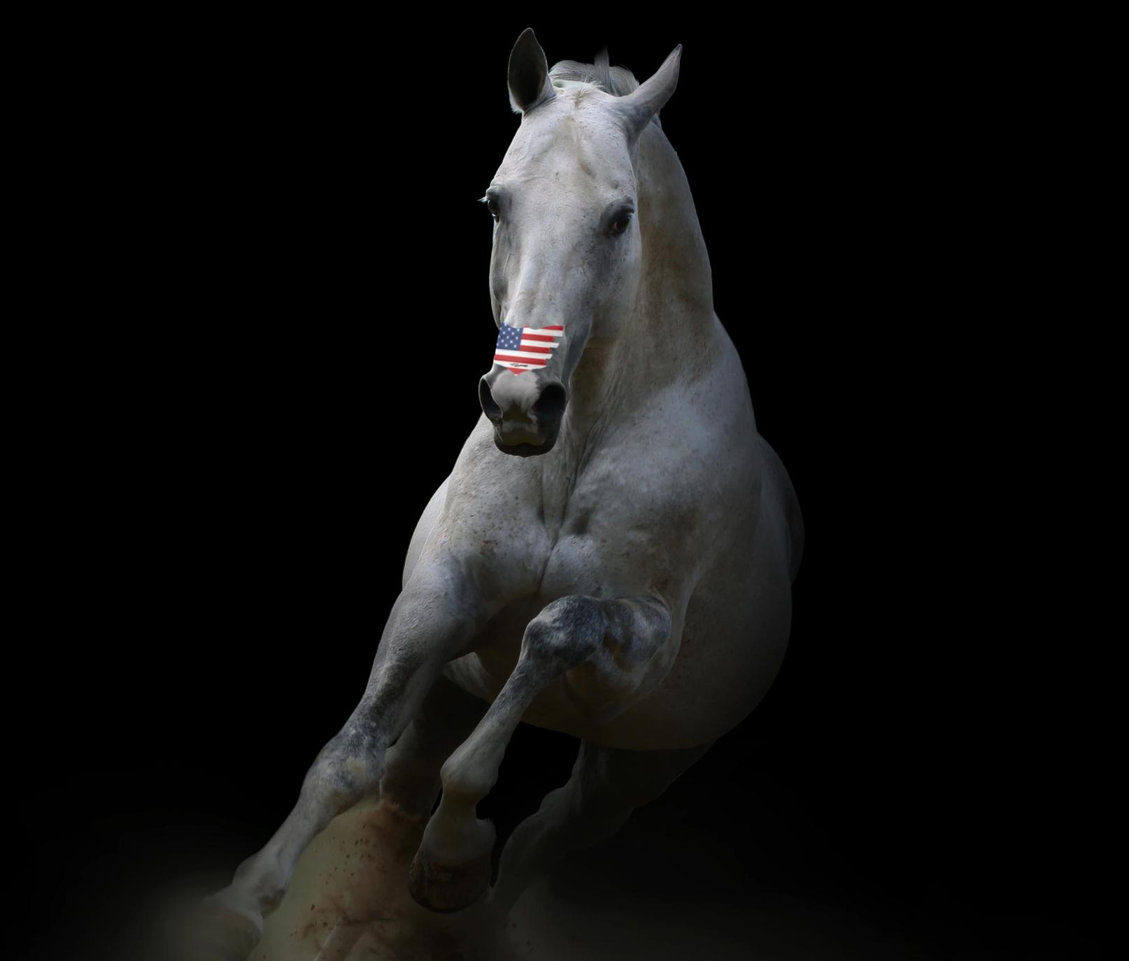 Mostre-nos as suas fotos patrióticas do cavalo para ganhar 2 pacotes de tiras de bandeira americana EUA! 1