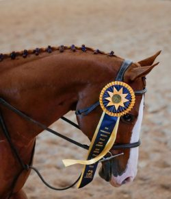 2020 Thoroughbred Makeover and National Symposium Postponed to 2021