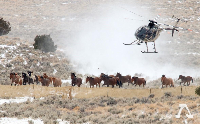 Op-Ed: Presidente Trump e o Congresso dos EUA devem intensificar e proteger cavalos selvagens americanos icônicos 3