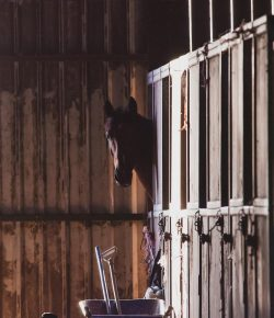 8 Things You Learn When Your Horse Is on Stall Rest