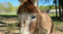 Reader Photo Challenge, Part II: Love Those Long Ears!