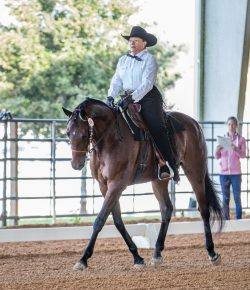 American Quarter Horses Excel in USEF Western Dressage Competition