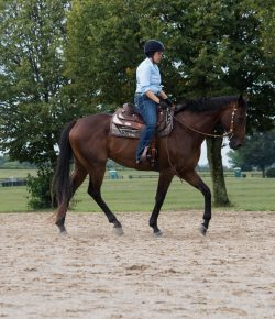 Western Dressage: Why I Gave It a Try (And Loved It!)