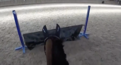 Ecovet Presents Mind Your Melon: Virtual Eventing