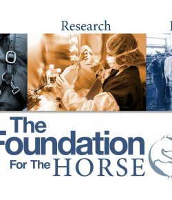Standing Ovation by Ovation Riding: The Foundation for the Horse