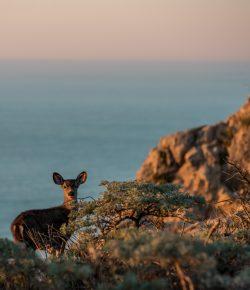 California Wildfires: Help the California Wildlife Fund, Win ManeJane California Spur Straps