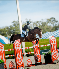 Best of JN: 10 Equine Insurance Questions Answered
