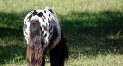 Photo Challenge: 19 Horse Butts