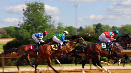 Standing Ovation by Ovation Riding: Thoroughbred Charities of America