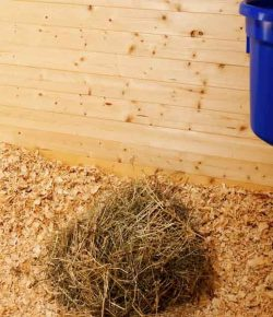 Kentucky Performance Products: Filling the Nutritional Gaps in Your Horse's Diet