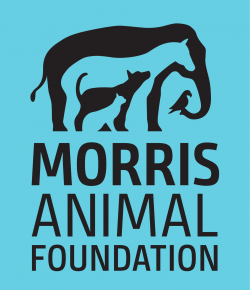 Standing Ovation by Ovation Riding: Morris Animal Foundation