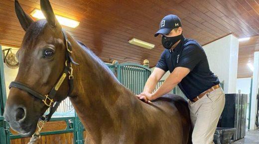 Best of JN: Veterinary Chiropractic Essentials Answered