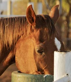 Kentucky Performance Products: Avoiding Choke in Horses