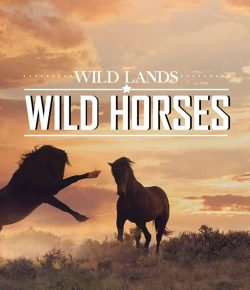 'Wild Land Wild Horses' Selected for 2020 Wildlife Conservation Film Festival