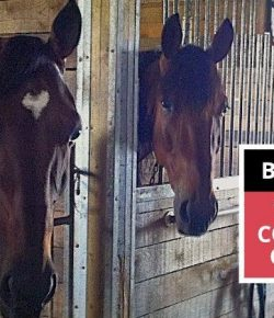 Practice Preparedness and Prevention: Resources on Barn Fire Prevention from Equine Guelph